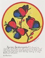 Agrias Sardanaplaus Fine Art Print