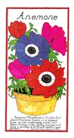 Anemone by Marlene Siff - various sizes