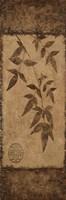 "Vert Leaves Choc Brown 2 by Kristin Emery - 6"" x 18"""