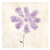 "Flowers Petals by Kristin Emery - 13"" x 13"""