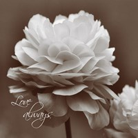 Sepia Blossoms II by Denise Romita - various sizes - $16.99