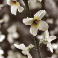Hint of Spring VI Framed Print