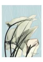 "Calla Lily Leaves by Albert Koetsier - 13"" x 19"""