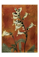 "Golden Foxglove 2 by Albert Koetsier - 13"" x 19"""