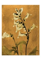 "Golden Foxglove 3 by Albert Koetsier - 13"" x 19"""