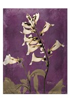 "Golden Foxglove 4 by Albert Koetsier - 13"" x 19"""