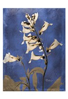 "Golden Foxglove 5 by Albert Koetsier - 13"" x 19"""