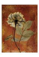 Rose 3 Fine Art Print