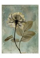 Rose 5 Fine Art Print