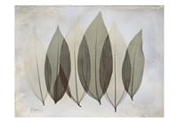 """Coculus Leaf by Albert Koetsier - 19"""" x 13"""""""