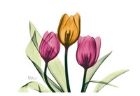 "Tulip by Albert Koetsier - 19"" x 13"""