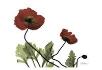 "Love Poppies by Albert Koetsier - 19"" x 13"" - $14.99"
