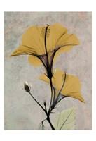 Hibiscus 4 Fine Art Print