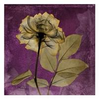 Rose 7 Fine Art Print