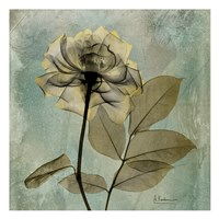 Rose 8 Fine Art Print