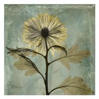 "Chrysanthemum 2 - square by Albert Koetsier - 13"" x 13"""