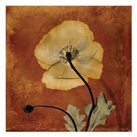 "Iceland Poppy 10 by Albert Koetsier - 13"" x 13"" - $12.99"