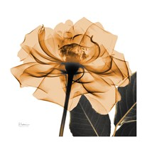 Copper Rose Black Leaves Fine Art Print