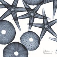 Starfish Trip 3 Fine Art Print