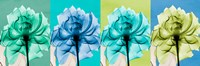 "Blue Green Flowers 1 by Albert Koetsier - 18"" x 6"", FulcrumGallery.com brand"
