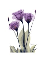 Gentian Hope Fine Art Print