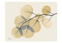 "Yellow Eucalyptus by Albert Koetsier - 19"" x 13"""