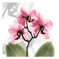 Orchid Pink Fine Art Print
