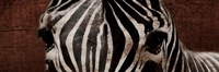 Zebra Eyes Framed Print