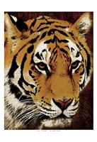 "Tiger 1 by Jace Grey - 13"" x 19"""