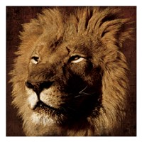 "Lion 2 by Jace Grey - 13"" x 13"", FulcrumGallery.com brand"