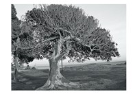The One Tree BW Fine Art Print