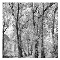 "Woods III by Joseph Charity - 13"" x 13"""