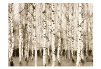 """Sepia Timber by Taylor Greene - 19"""" x 13"""" - $14.99"""