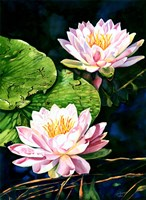 Waterlily Reflections Fine Art Print