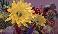 """24"""" x 14"""" Flowers"""