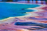 Pattern in Bacterial Mat, Midway Geyser Basin, Yellowstone National Park, Wyoming by Adam Jones - various sizes