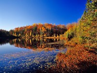 Pond in the Chaquamegon National Forest, Cable, Wisconsin by Chuck Haney - various sizes