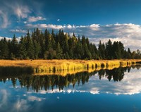 Trees reflecting in Snake River, Grand Teton National Park, Wyoming Fine Art Print