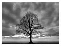 Great Tree Fine Art Print