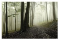Green Woods 1 Fine Art Print