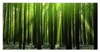 "Green Woods 3 by PhotoINC Studio - 38"" x 20"""