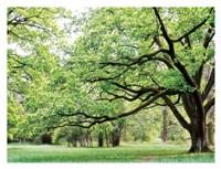 "Green Woods 4 by PhotoINC Studio - 34"" x 26"""