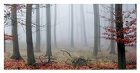 "Misty Woods by PhotoINC Studio - 38"" x 20"""