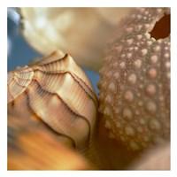 "Shells 1 by PhotoINC Studio - 26"" x 26"""