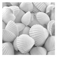 "Shells 3 by PhotoINC Studio - 26"" x 26"""