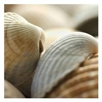 "Shells 4 by PhotoINC Studio - 26"" x 26"""