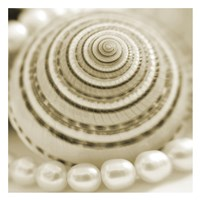 """Shells and Pearls 1 by PhotoINC Studio - 26"""" x 26"""""""