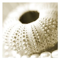"""Shells and Pearls 2 by PhotoINC Studio - 26"""" x 26"""""""