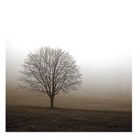 "Tree in Mist 1 by PhotoINC Studio - 26"" x 26"""