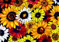 Sunflower Mix Fine Art Print